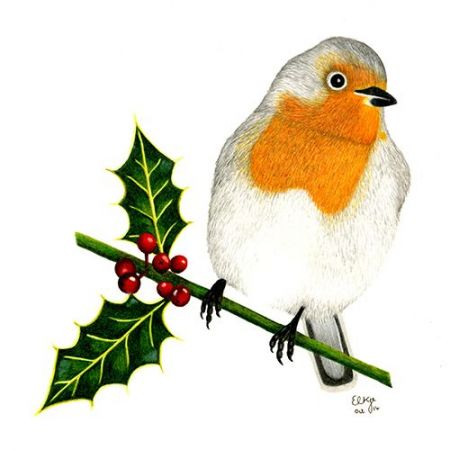 The Robin amongst the Holly